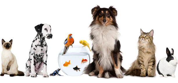 animales vivos, mascotas, mexico, importar, agencia aduanal, gatos, perros, aves