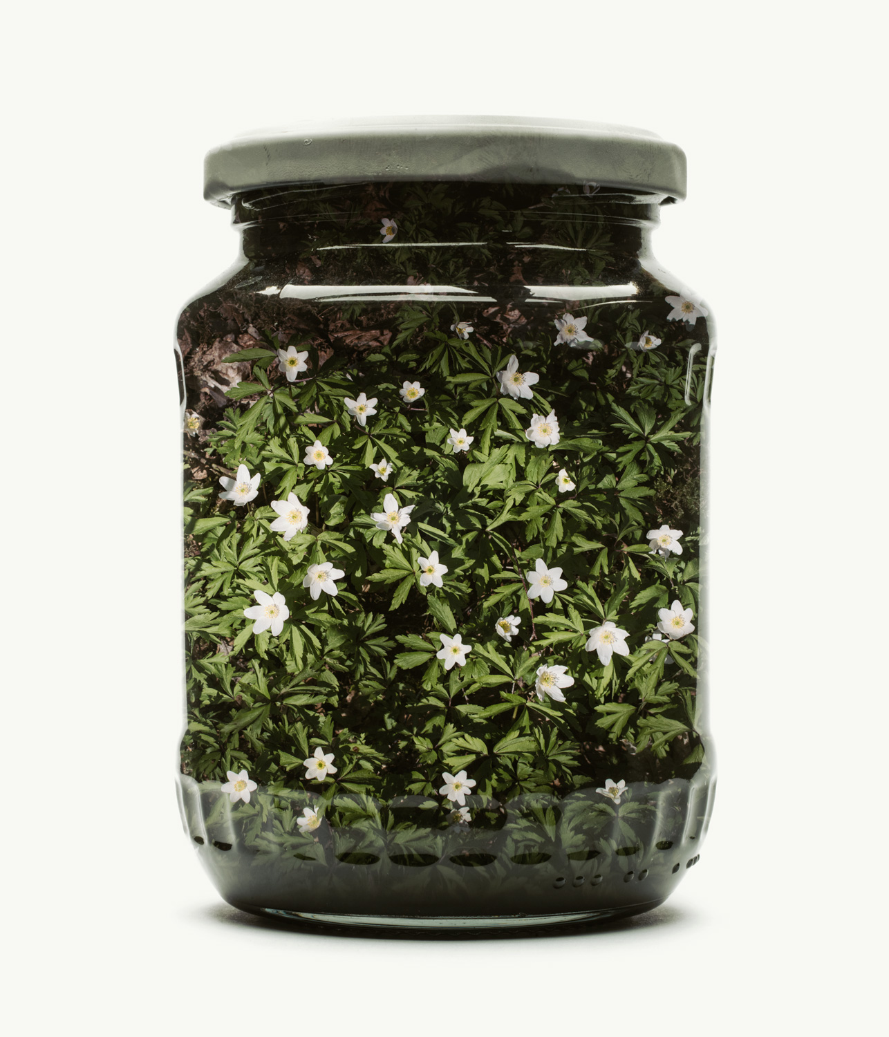 Visual Artwork: Jarred Windflower (Medium) by artist and creator Christoffer Relander