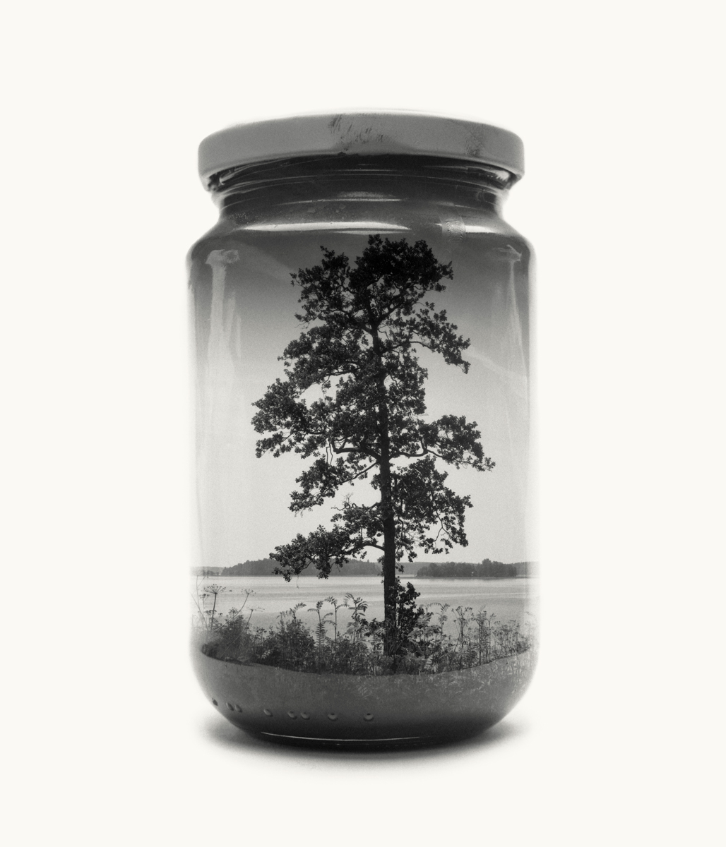 Visual Artwork: Jarred Tree (Medium) by artist and creator Christoffer Relander