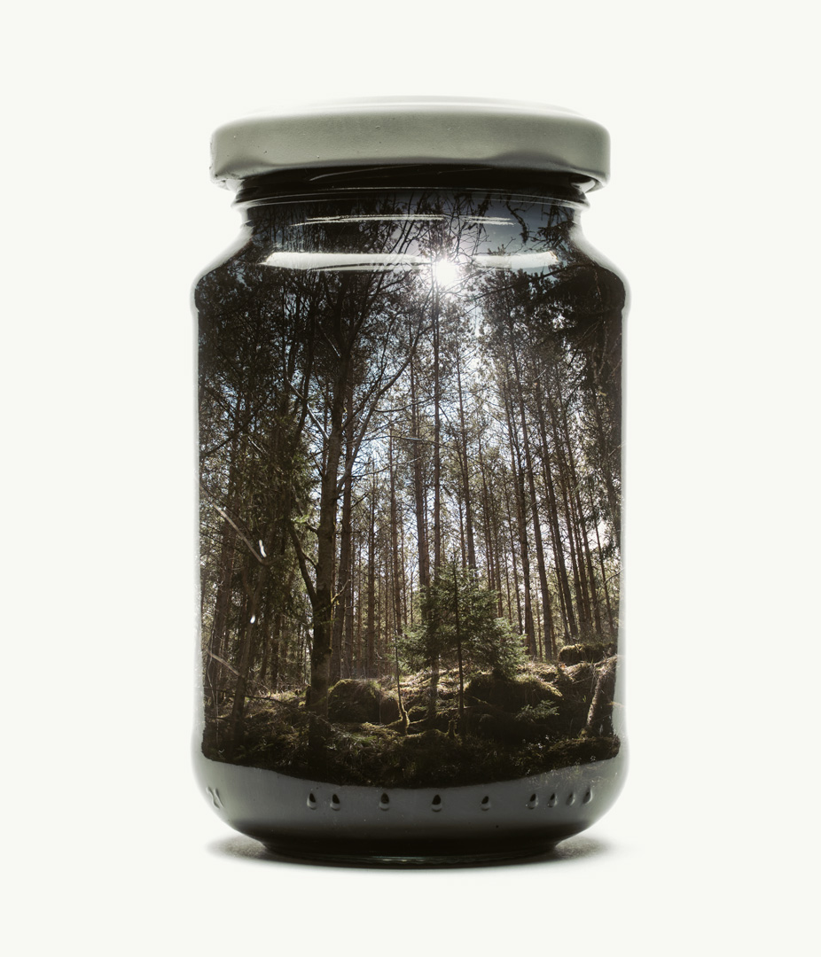 Visual Artwork: Jarred Pine Forest (Medium) by artist and creator Christoffer Relander