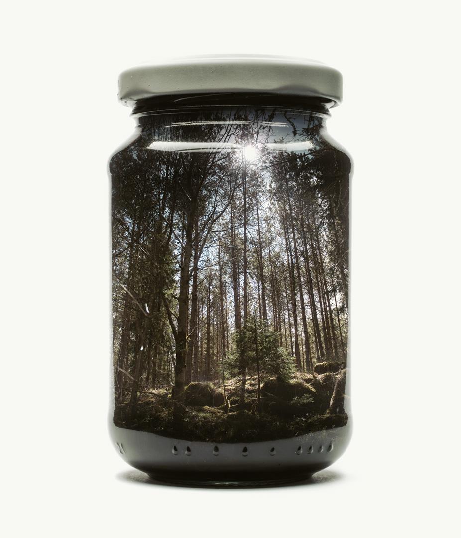 Visual Artwork: Jarred Pine Forest (Medium) by artist and creator Christoffer Relander