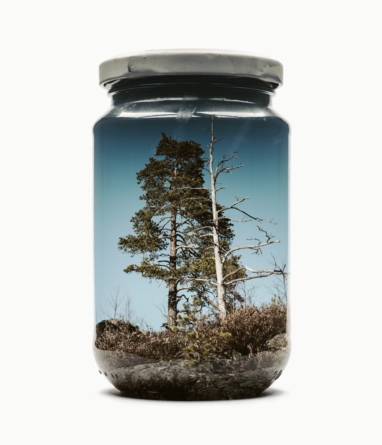 Visual Artwork: Jarred Couple Of Pines (Medium) by artist and creator Christoffer Relander