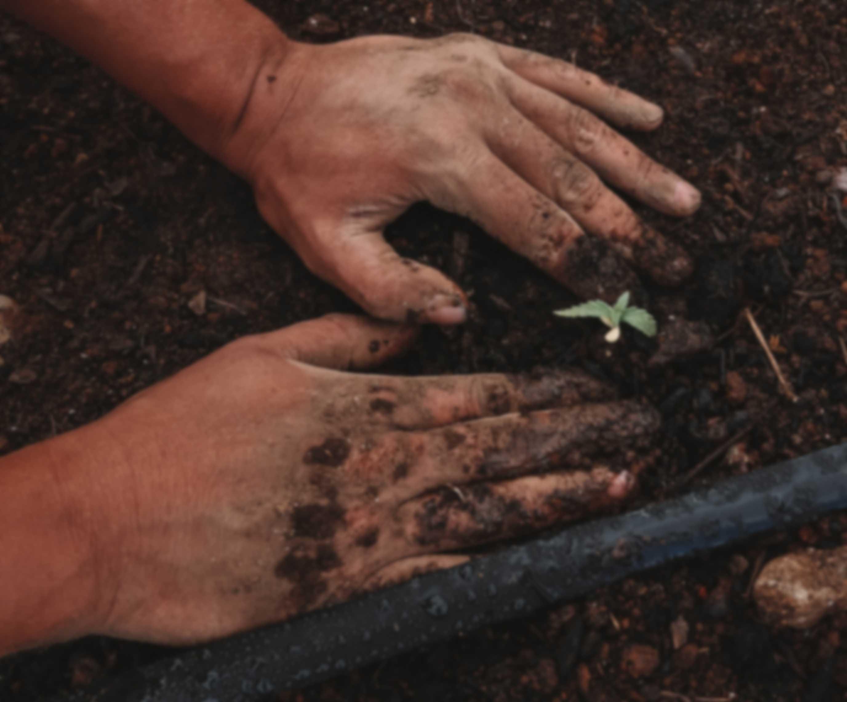 Is Hemp legal to grow?