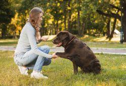 HTT İstanbul Köpek Eğitim Takımından Can Dostlarınıza Temel İtaat, (Tasmalı), Tuvalet ve Sosyal Davranış Bozukluğu Eğitimi 40 günlük kapsamlı eğitim programıdır.  4. aydan itibaren başlayan eğitimlerimizde, Köpeğin cinsine, karakterine, algılamasına, isteğine göre şekillendirilir. Eğitimlerimiz 40 günlük süreç sonunda tamamlanır. 40 günlük eğitim sürecinde en az 10 antrenman pet sahibi ile birlikte yapılarak, köpeklerinin sahiplerine  karşı itaatkar  olmaları sağlanmaktadır. Bu çalışmamızdaki amacımız köpeklerinizin birebir sizden eğitim alarak sizlere itaat seviyesinin yükselmesini sağlamaktır.  Pet sahipleri ile birlikte yaptığımız eğitimlerde, diğer pet sahipleri ile aynı anda takım halinde çalışarak köpeklerin hem sosyalleşmesi hem de sadece sessiz bir ortamda itaat etmeleri yerine her ortamda komutları dinlemesi sağlanmaktadır.  Köpeğinizin eğitim merkezimizde aldığı eğitimleri normal yaşantısına sorunsuz bir şekilde adapte edebilmesi ve eğitimin başarı oranın yüksek seviyede olması için 40 günlük eğitimin ardından pet sahibi ile birlikte 4 hafta boyunca her haftasonu eğitim merkezimizde 1 günlük sosyal hayata adaptasyon eğitimimize devam edilmektedir.  Köpeklerinizle yaptığımız bu eğitimlerle, vitaat eğitiminin yanısıra ev iç uyum, ev içerisindeki davranış bozukluklarının düzeltilmesi (kapıya havlama, gelen kişilerin üzerine atlama, koku bırakma ve agresif davranış bozuklukları vb.) sosyal hayata uyum yani cafe, restaurant vb. halka açık alanlarda sahibi ile uyum içerisinde kalması sağlanmaktadır.