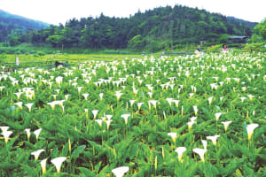 Spring into Action: Five Diversified Tours to Explore Taipei