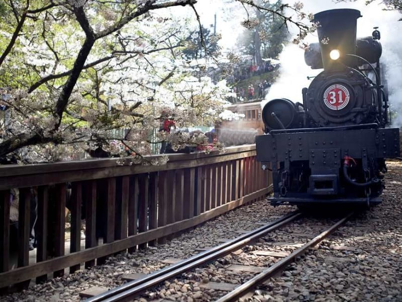 Day 3: Take the Alishan Forest Railway