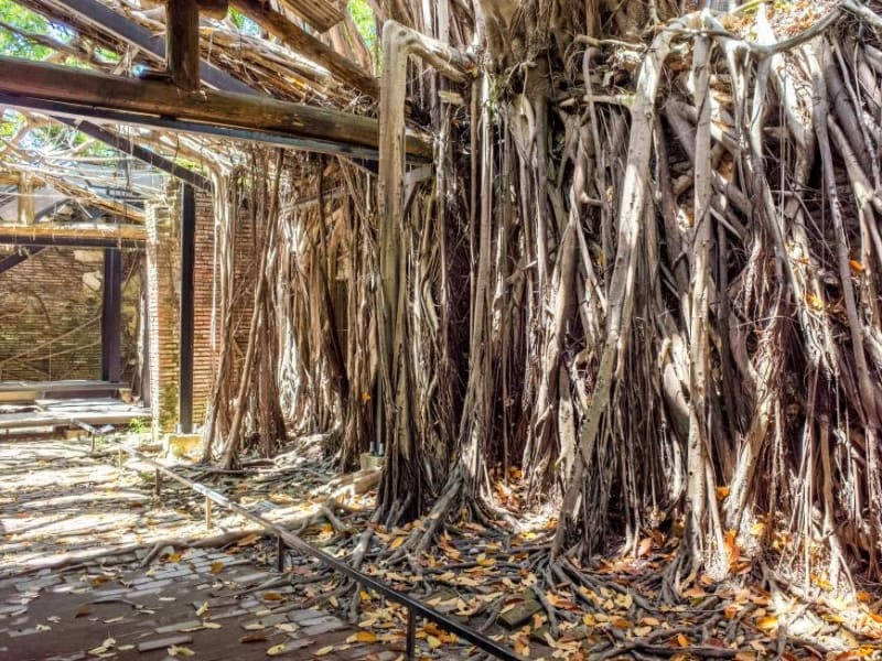 Day 4: Visit an old Dutch castle and an ancient banyan tree