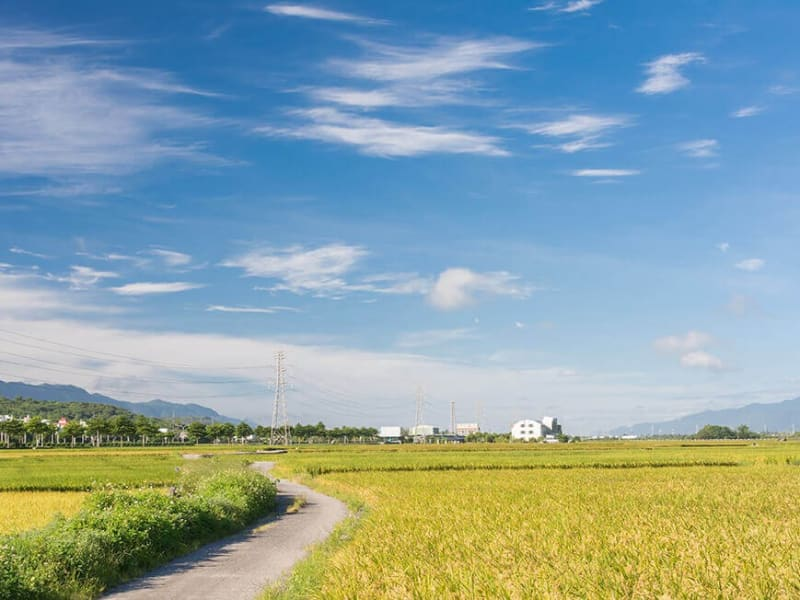 Day 4: Bicycle ride through the rice paddies of the Chishang Bicycle Trail.