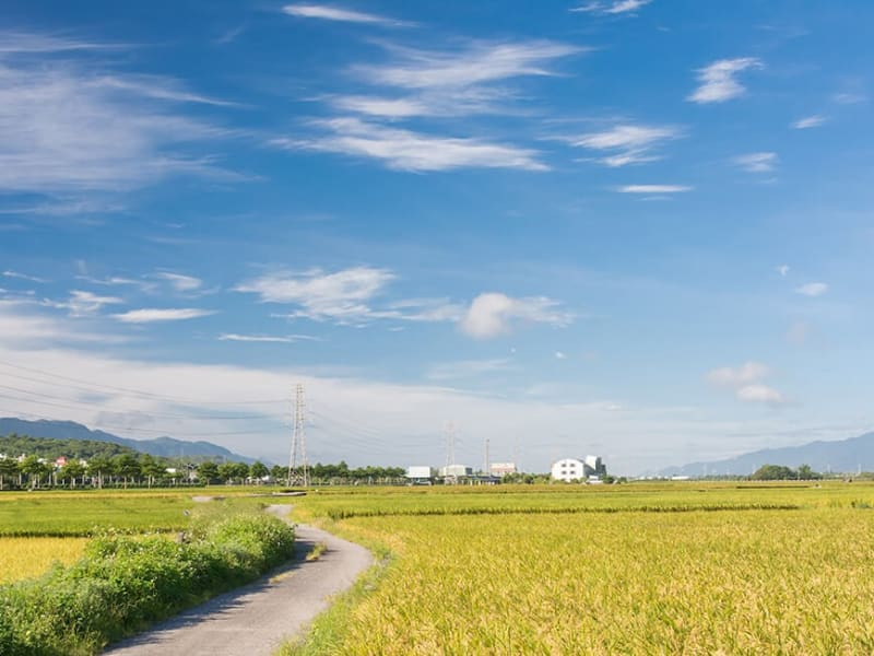 Cycle on beautiful roads and bike paths passing through Taiwan's rice paddies and flower fields.