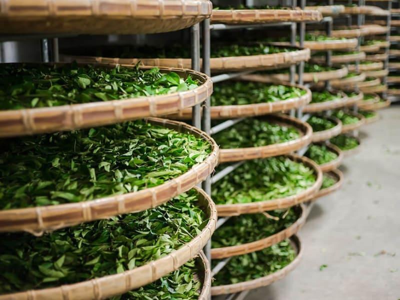 台湾茶について学ぶ(※画像はイメージです)