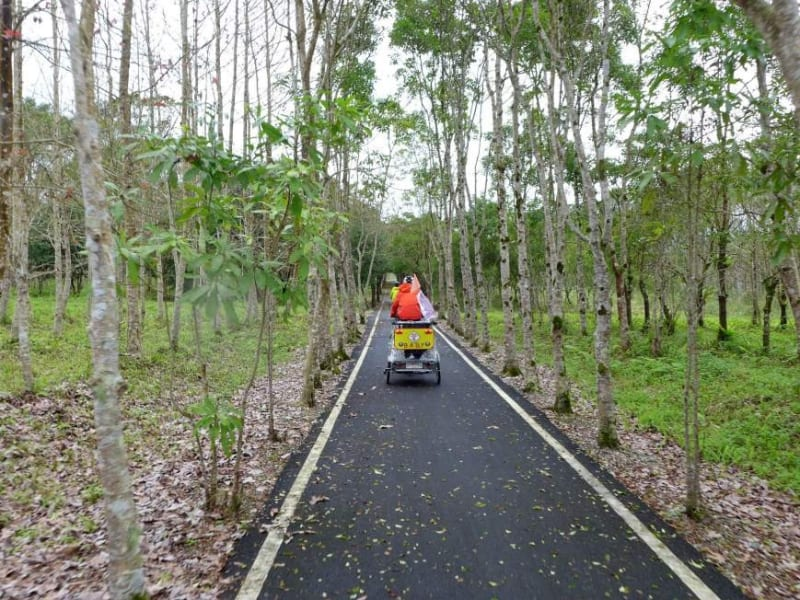 Cycling through Danongdafu Forest, a uniquely reforested area filled with trees and flowers