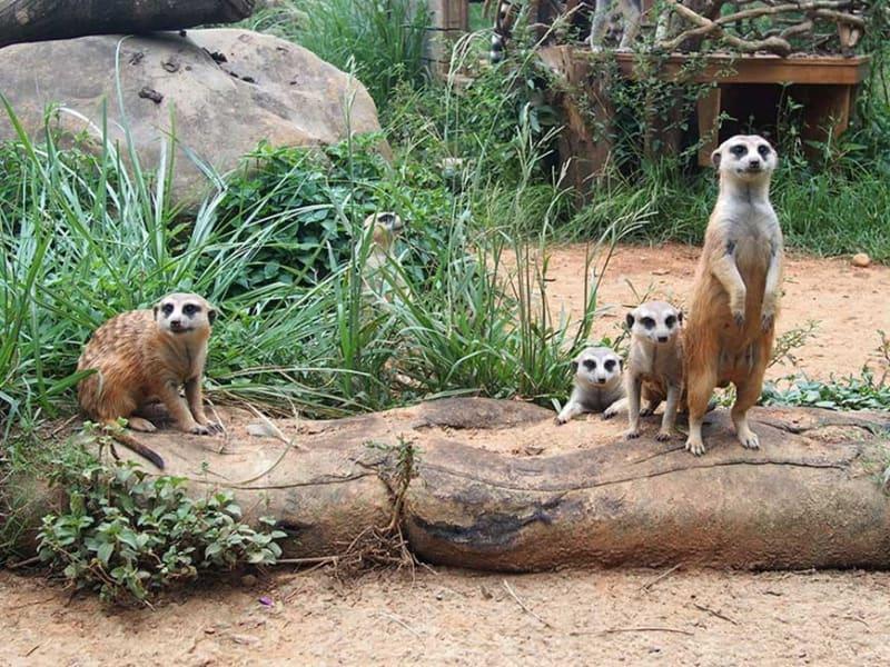 Meerkat Observation Experience Tour
