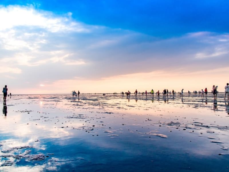 Enjoy mother nature's art at the Gaomei Wetlands