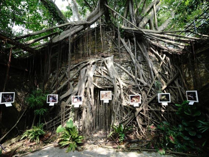 安平樹屋と徳記洋行を巡る旅