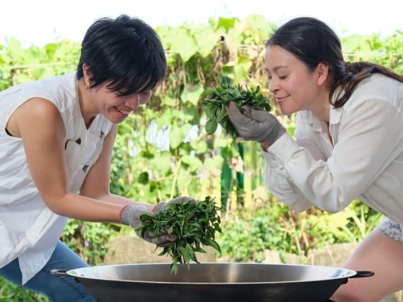 茶葉を炒る、手で揉むという工程が体験できます