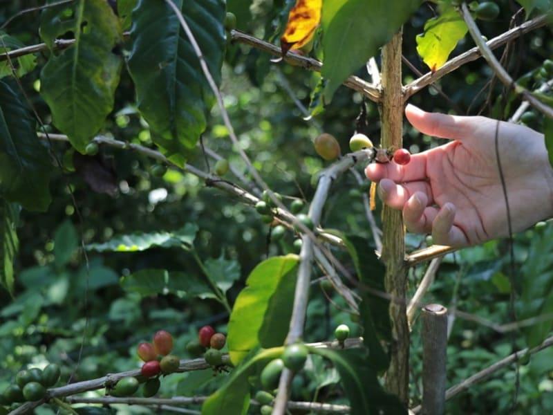 Haian Coffee