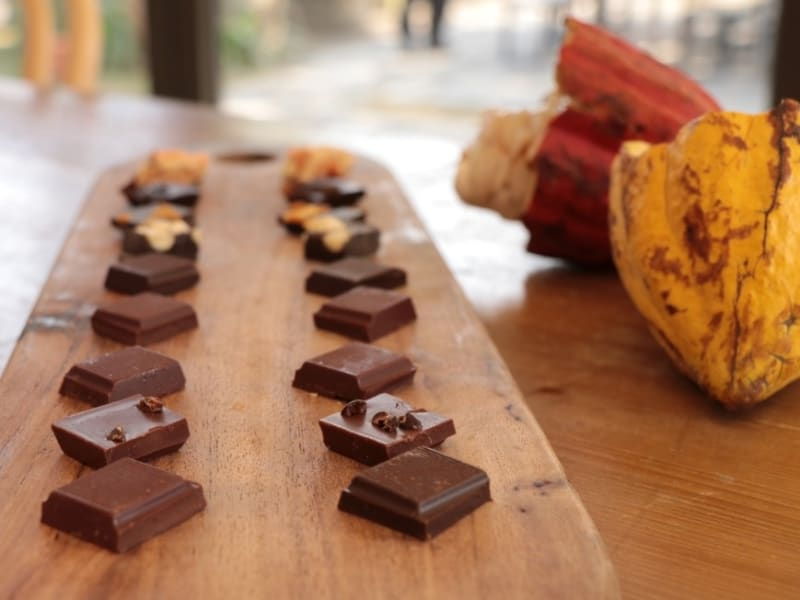 Visit world award winning chocolate factory Fuwan and try chocolate tasting