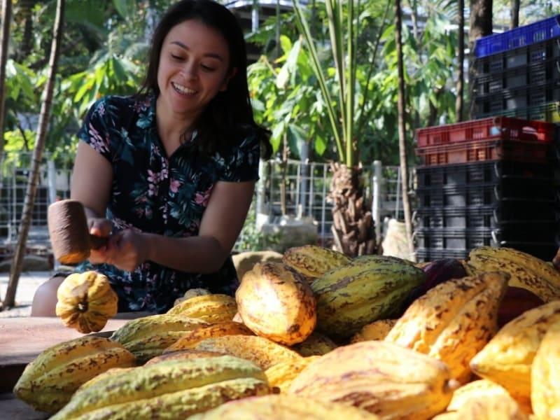 Tour Taiwan's original chocolate farm