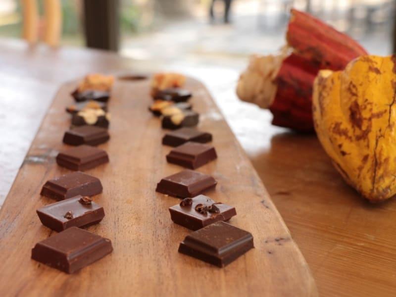 Visit an award-winning, local chocolate farm