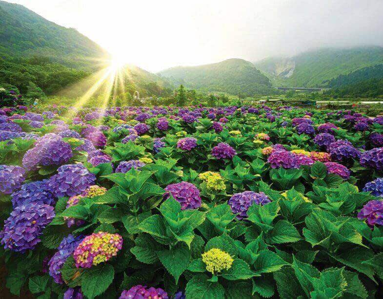 彩りを楽しむ絶景花見ルート  台北の花見シーズン完全攻略