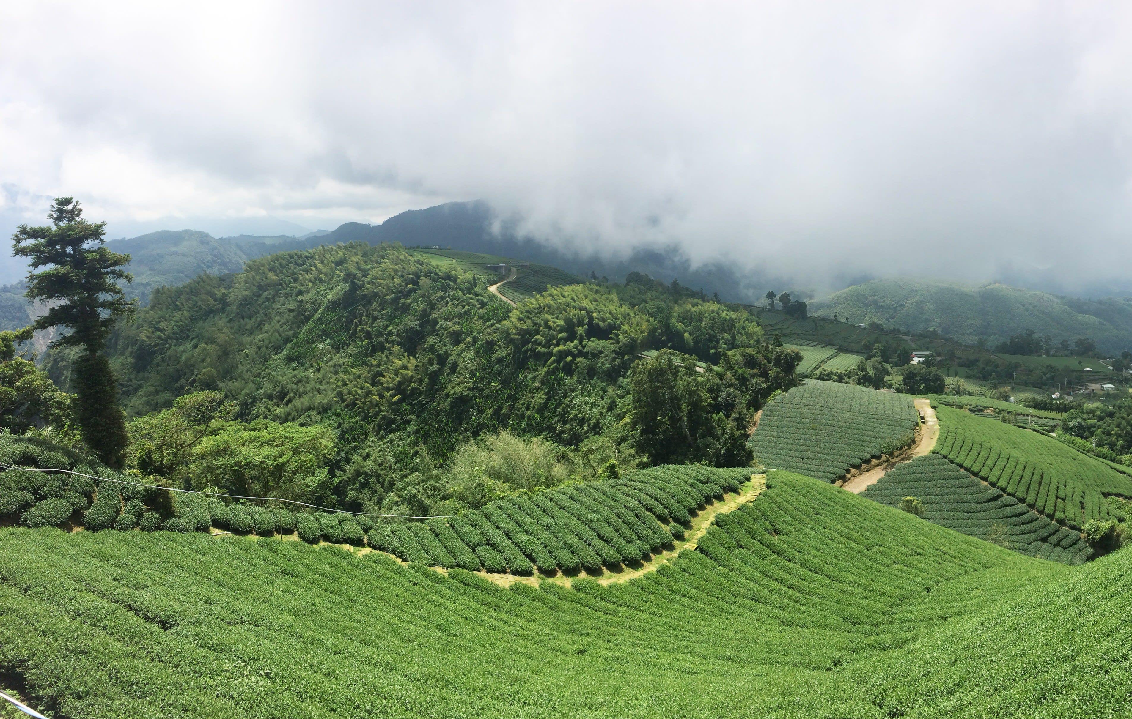Tea Culture Day Tour