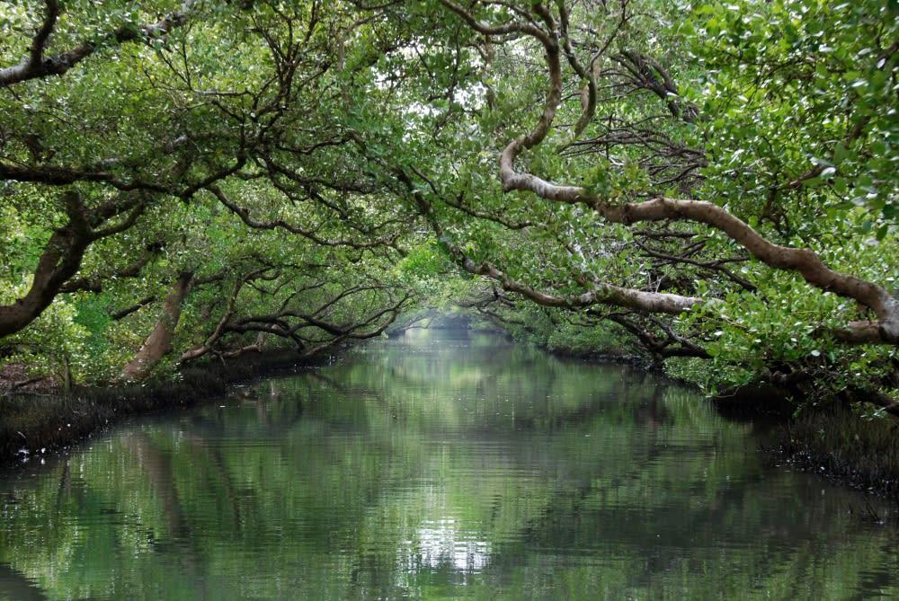 【嘉義台南】故宮南院・探索在地自然風情之旅