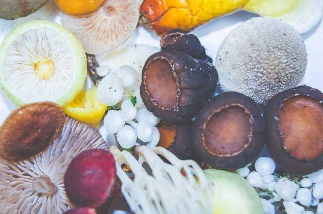 Heilpilze, potente Superfoods zur Stärkung der Immunität
