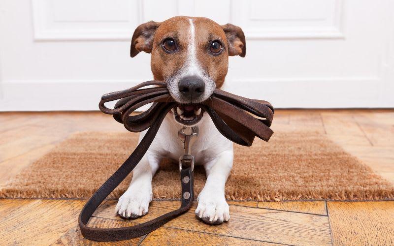 คุณจะหาโรงเรียนฝึกสุนัขที่ดีที่สุดได้อย่างไร