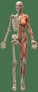 osteoporose diagnose ursachen