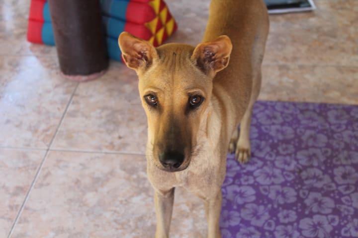 hund adoptieren Kosten