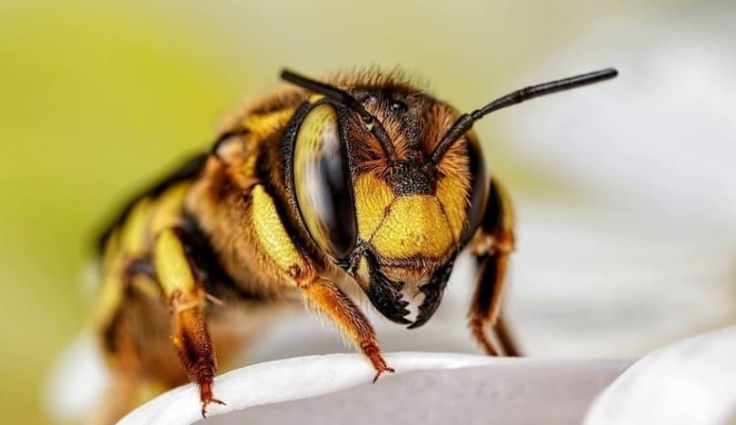 Bakıda 62 yaşlı kişi arı sancmasından ölüb