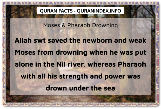 Discover Amazing, Interesting and Beautiful General Quran #Quotes and #Facts @ https://quranindex.info/blog/ [531] #Quran #Islam