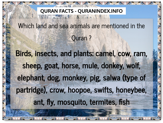 Discover Amazing, Interesting and Beautiful General Quran #Quotes and #Facts @ https://quranindex.info/blog/ [499] #Quran #Islam