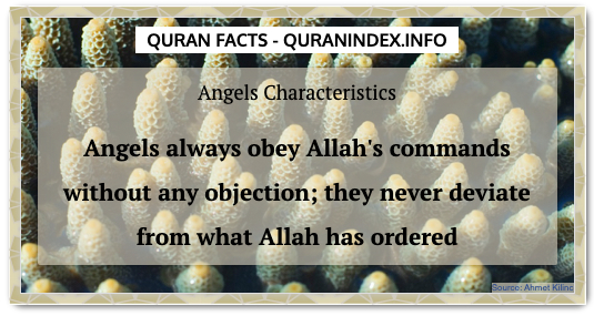 Discover Amazing, Interesting and Beautiful General Quran #Quotes and #Facts @ https://quranindex.info/blog/ [247] #Quran #Islam