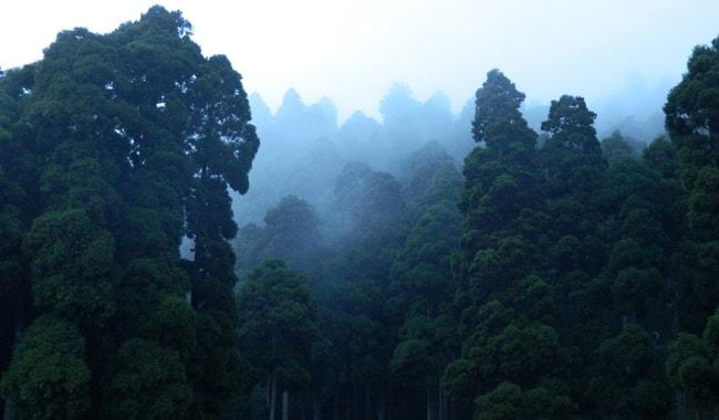Amazon Rainforest Amazing Facts