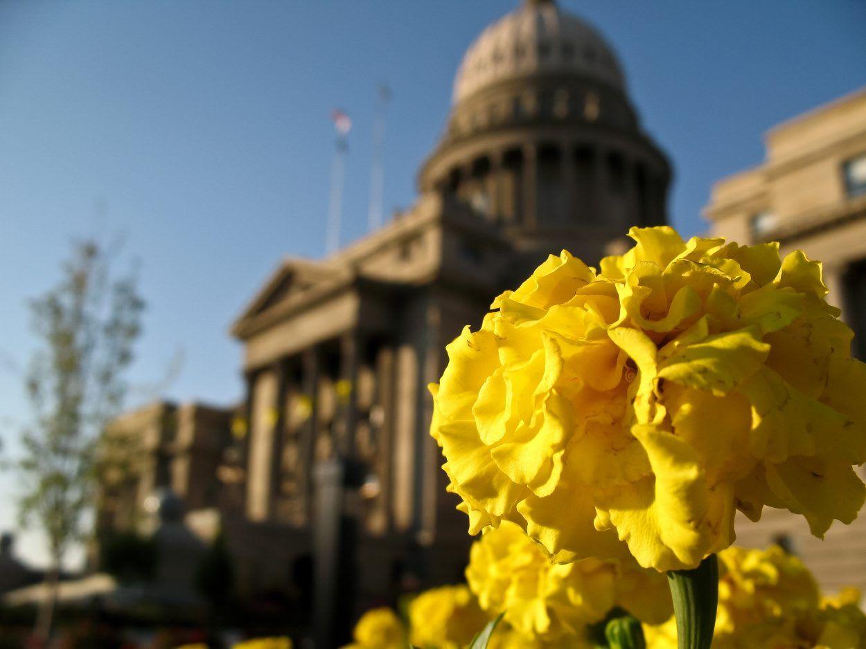 Capital Flowers