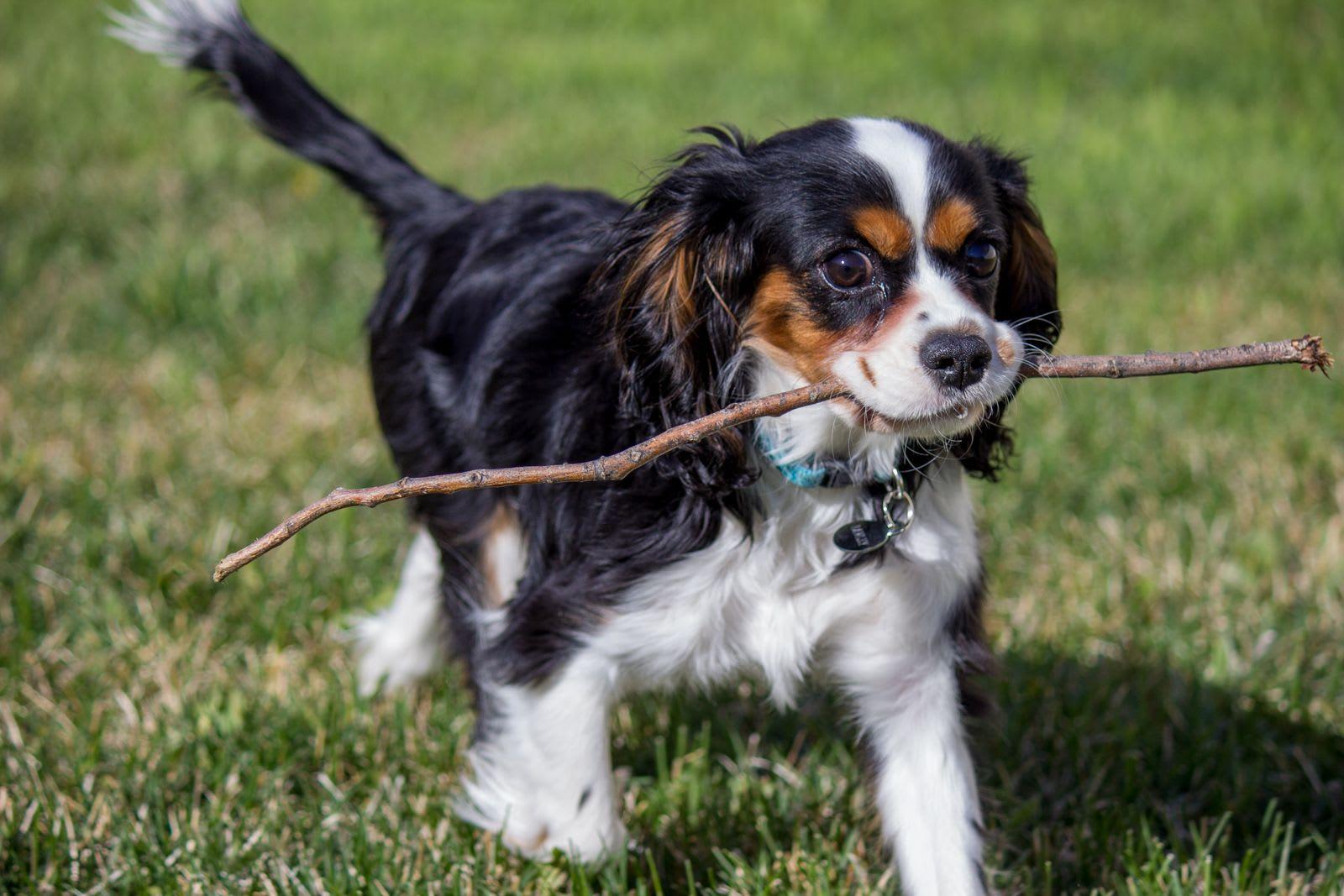 Stick Boy