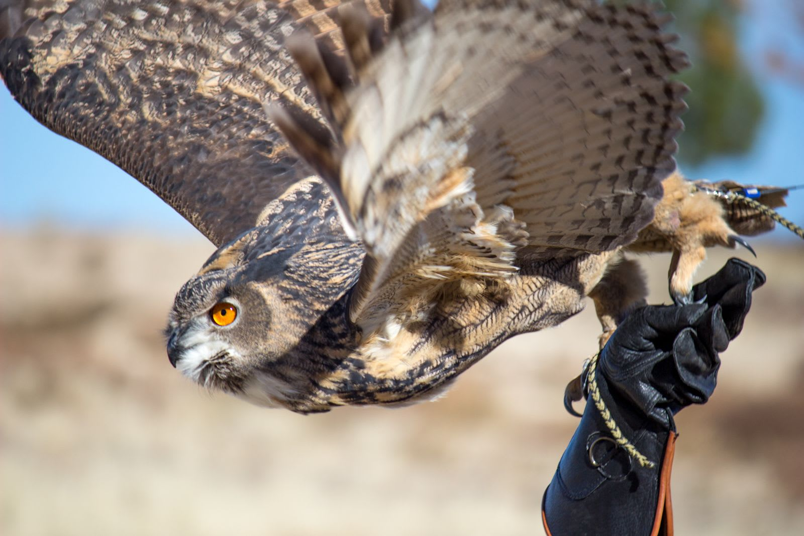 Birds of Prey Flight Demonstrations