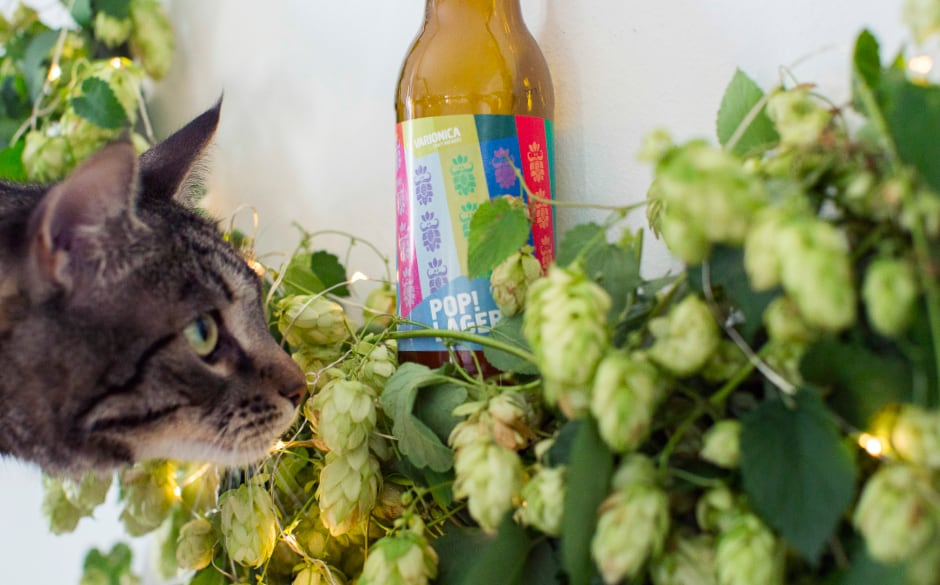 Varionica craft brewery DIY hop hoop cat