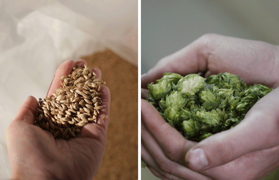varionica craft brewery craft beer beer varionica brewery beer tasting pivo craft pivo hmelj hops zob ječam malt oatmeal