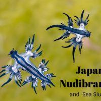 Kindleで電子書籍「Japan Nudibranchs and Sea Slugs」を出版してみました