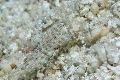 トウリンミノウミウシ属の一種 4