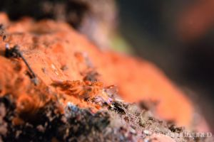 トウリンミノウミウシ属の一種 3