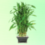 plants delivery usa