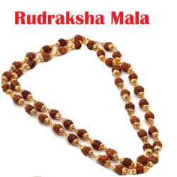 5 Mukhi Rudraksha/Rudraksh Mala With Gold Plated Cap - Pack of 1