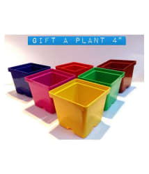 Ojorey Gift A Plant 4 Inch Set Of 8 Multicolored Square Flower Pots/Planters