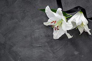 Lilies resting on a dark grey background