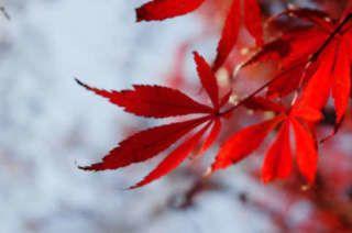 la foglia herbal bioenhancers