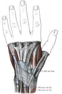 gray-polso-anatomia-tendini-deQuervain