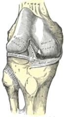 Articolazione del ginocchio